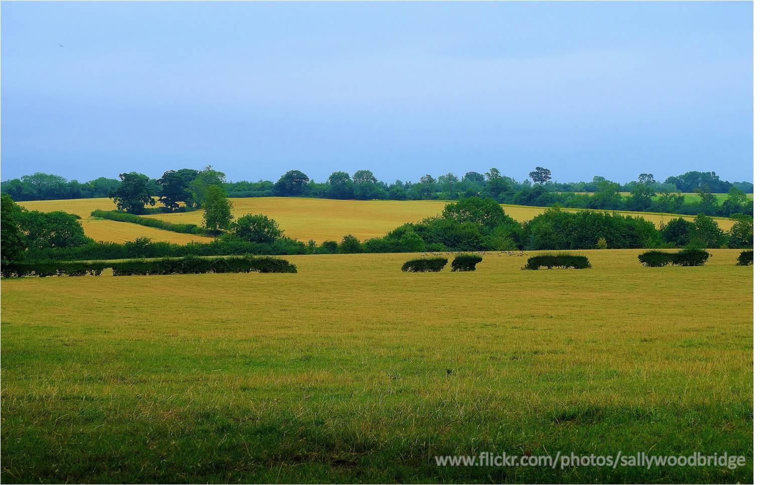 cowpastures
